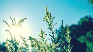 Prognoza pogody na dziś: po rześkim poranku ciepły i słoneczny dzień