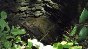 """Wilk wpadł do nieczynnej studni. Leśników zaalarmowało skomlenie """"spod ziemi"""""""