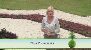 Perła polskiego baroku - park w Nieborowie (odcinek 553)